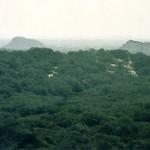 MINAM conservará bosques peruanos con S/. 400 millones de la cooperación internacional