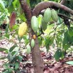 Empresarios agroexportadores de Ucayali aplicarán nuevas estrategias para lograr desarrollo productivo