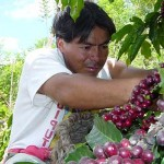 Cafetaleros piden recursos al Gobierno para fertilizar plantas y advierten riesgos al exportar a Colombia