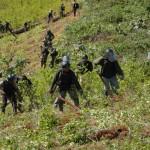 CORAH erradicó más de tres mil hectáreas de hoja de coca ilegal en Tocache