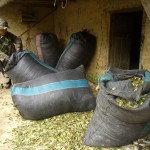 Policías de Cayumba decomisaron 151 kilos de hoja de coca en diversos operativos a vehículos