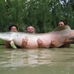 Ucayali exportará paiche y otros peces amazónicos a mercados de Brasil
