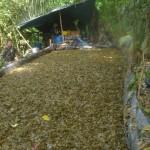 Destruyen cuatro laboratorios de elaboración de pasta básica de cocaína en el VRAE
