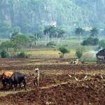 Agricultores víctimas del cambio climático de cinco regiones dieron su testimonio
