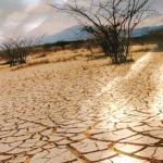 Realizarán foros y visitas de campo por el Día Mundial contra la Desertificación