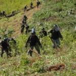 CORAH erradicó más de cuatro mil hectáreas de coca ilegal en San Martín en lo que va del año