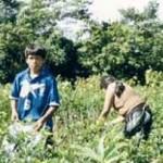 Niños que trabajan en producción de coca en el VRAE están expuestos a daños irreversibles