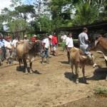 PDA realiza encuentro intercomunitario de ganaderos en Uchiza