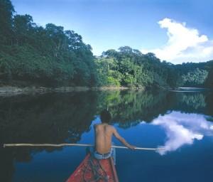 Solo hay un guardaparques por cada 40 mil hectáreas de bosques