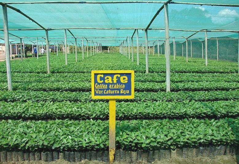 Regi n ucayali ejecuta 16 proyectos productivos por m s de for Proyecto productivo de vivero forestal
