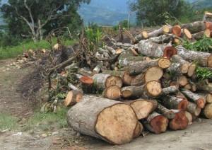 No solo los madereros ilegales sino también los legales e incluso ex autoridades realizan actividades de tala indiscriminada