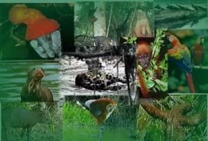 Junto al Parque Nacional Yasuní, en Ecuador, conforman área con mayor biodiversidad en América del Sur