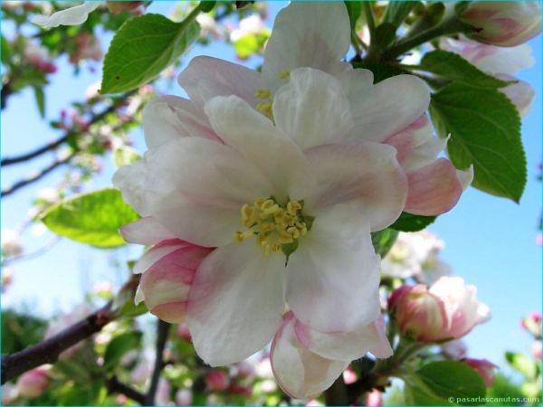 Flores exoticas del mundo imagenes imagui - Flores tropicales fotos ...