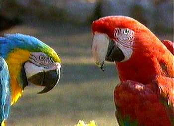 Denuncian tráfico imparable de animales silvestres de la amazonía