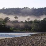 Crecimiento de cultivos de coca afecta zonas de amortiguamiento de Parques Nacionales