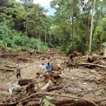 Más de 7 mil hectáreas de bosques se pierden en el VRAE por cultivos de coca y tala ilegal