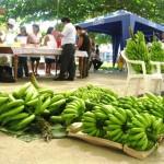 Aucayacu rindió homenaje al plátano y al juane más sabroso en la fiesta de San Juan