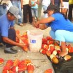 Aucayacu fue sede del IV Festival Regional del Cacao de Calidad del Alto Huallaga