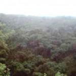 Buscan mitigar tala de especies forestales en Parque Nacional Cerros de Amotape