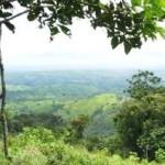 Intervienen a dos taladores en Parque Nacional Cerros de Amotape en Tumbes