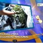 Gobierno no asume con seriedad problema del crecimiento del cultivo de hoja de coca (video)