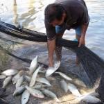 Se incrementa la actividad de los piscicultores en la región Madre de Dios