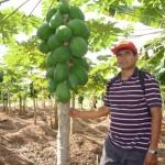 Universidad Agraria de la Selva desarrolló papaya resistente a la virosis