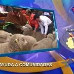 Entregan ganado a comunidades afectadas por la violencia en Huanta (video)