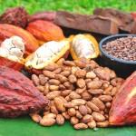 Concurso Nacional del Cacao que se realiza en el VRAE dará a conocer calidad del cacao peruano