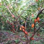 Agricultor del Alto Huallaga comparte con INFOREGIÓN sus exitosas experiencias agrícolas