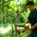 Todo quedó listo para la gran final del IV Concurso Nacional del Cacao en el VRAE
