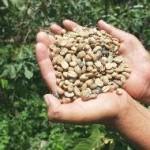 Más de 300 productores y empresarios cafeteros del mundo se reunirán en Tarapoto