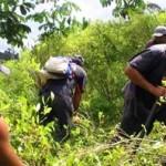 Cultivos de coca no prosperaron en Ecuador durante 2009