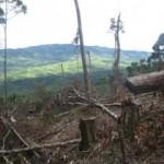 Amenazan de muerte a ronderos que protegen Parque Nacional Coordillera Azul