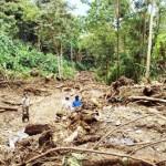 Cultivos ilegales de coca generan daños irreparables en el medio ambiente del VRAE