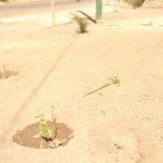 Destruyen plantas ornamentales en ruta Huanta – Maynay