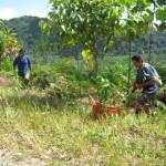 Comuneros de José Crespo y Castillo reforestan ocho kilómetros de carretera