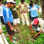 Con plantones de pino y tornillo recuperan suelos degradados por coca ilegal en Kimbiri