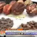 10 mil agricultores del Alto Huallaga se capacitaron para sembrar café y cacao orgánico (video)
