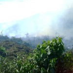 Avanza peligrosamente depredación de bosques e incremento de cultivos de coca en el VRAE