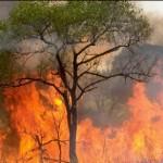 Inescrupulosos prenden fuego a arbustos y generan incendios forestales en Aucayacu