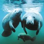 Utilizaban como mascotas a especies en peligro de extinción