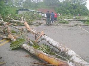 Pese a su actitud violentista cocaleros no lograron suspender la erradicación de coca ilegal
