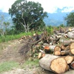 Taladores ilegales arrasan bosques en cabeceras de las cuencas de San Francisco