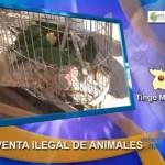Autoridades de Tingo María intervinieron mercado de venta ilegal de animales silvestres (video)