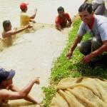 Se consolida crianza de peces amazónicos en el VRAE