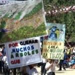 Realizaran numerosas actividades por la Semana Forestal en el VRAE