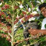 El secreto del café de calidad es apoyar el trabajo de la post cosecha