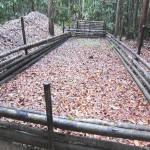 Destruyen seis laboratorios de droga en Río Abujao, Ucayali