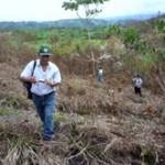 Sesenta por ciento de bosques de Leoncio Prado desaparecieron por la tala ilegal